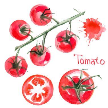 hand-drawn watercolor tomatoes