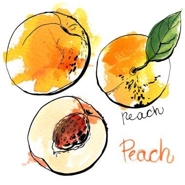 hand-drawn watercolor peaches