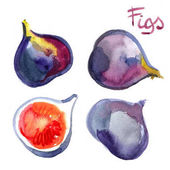 Fotografie Fig painted with watercolors on white background. Watercolor bright colored fruits.