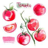 Állítsa be a paradicsom készült háttér. Tanulmány a zöldség. élelmiszer