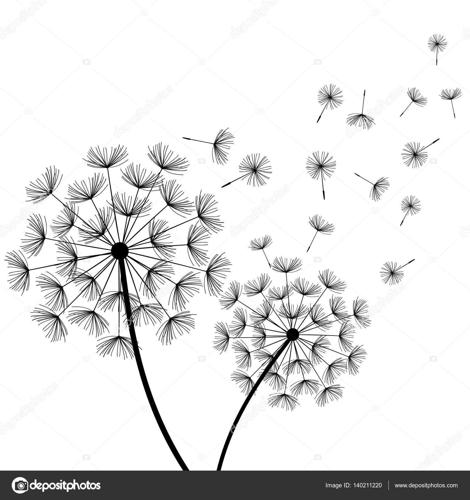 Beautiful Nature White Background With Black Dandelions And Flying Fluff Floral Stylish Trendy Wallpaper Summer Or Spring Flowers Modern Backdrop