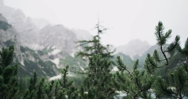 Close-up pine trees. Red epic. 4k