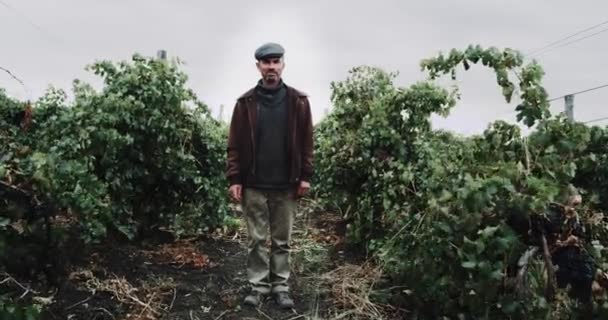 Country men stand in the middle of vineyard. red epic