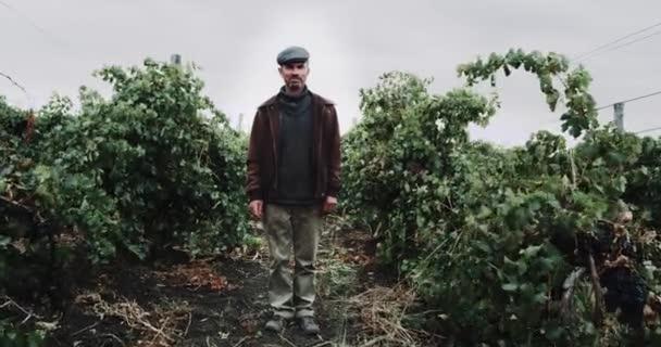 Ország férfiak állni szőlőültetvény közepén található. Red epic