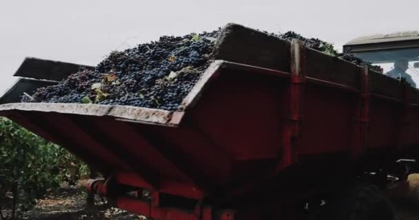 Na vinici trať s kontejnerem přepravovány hrozny. 4k
