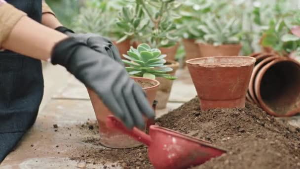 Detaily zahradníka ve velkém květinovém skleníku zasadil květinu do květináče velmi pečlivě a soustředěně
