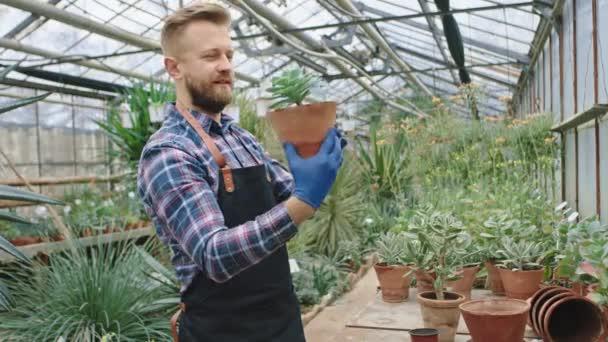 Šťastný a koncentrovaný zahradník v průmyslovém květu skleník vzít květináč s dekorativní rostliny a kontrolu všech listů z rostliny.