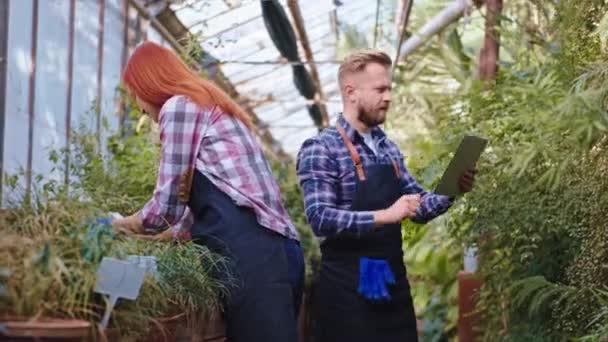In einem Gewächshaus mit Zierpflanzen kümmern sich hübsche Familienväter und Gärtnerinnen mit einem Tablett um die Pflanzen, um sich Notizen über den Zustand der Blüte zu machen. Schuss auf Arri Alexa