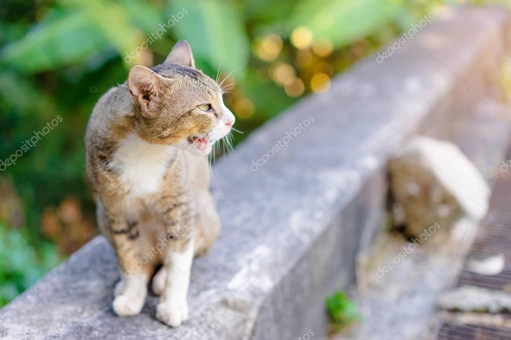 Cute cat in park