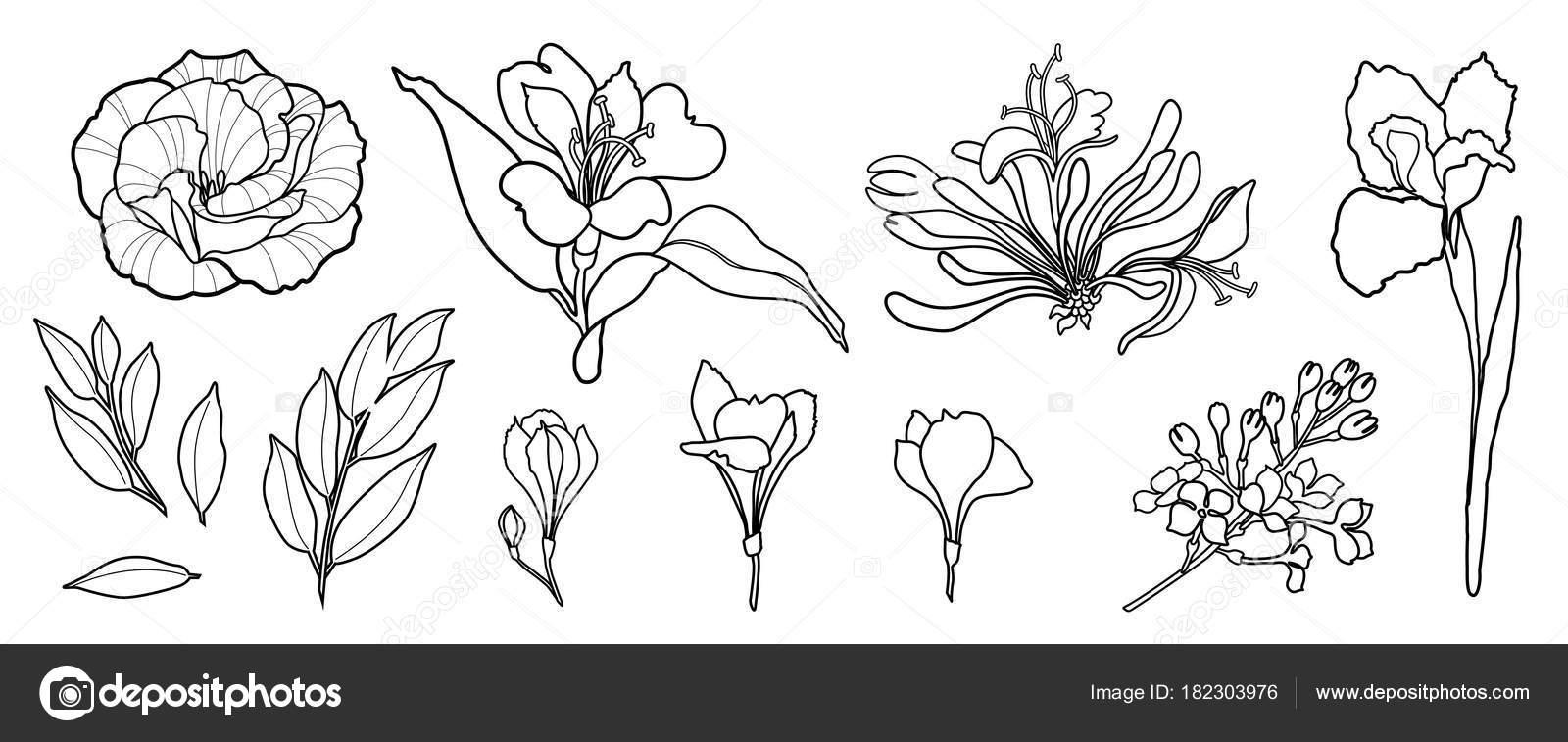 pfingstrose zeichnen blumen zeichnung, hand zu zeichnen linie vektor-blumen-set. pfingstrose, rose, iris, Design ideen