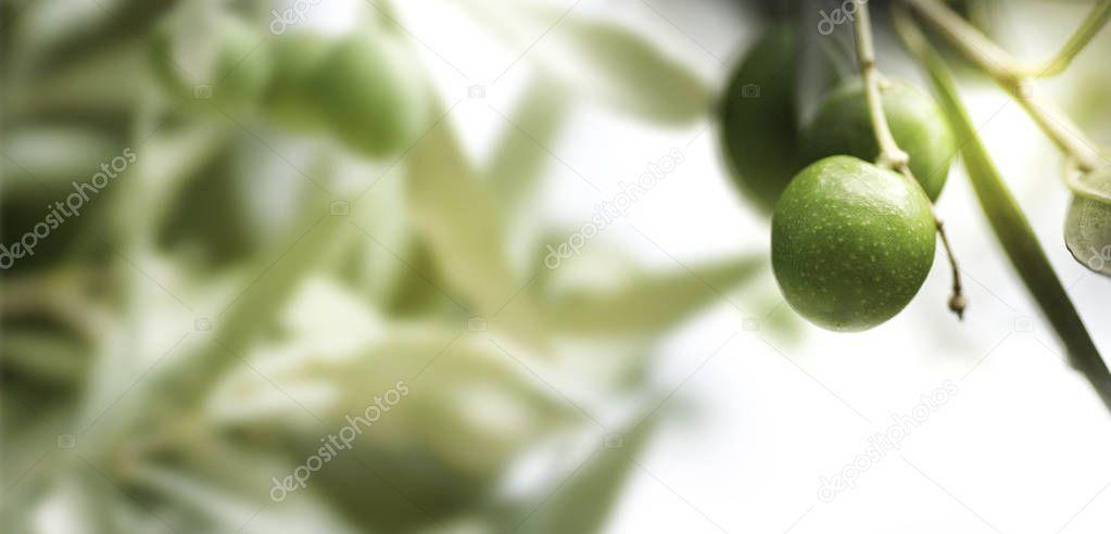 Olive Tree, horizontal image
