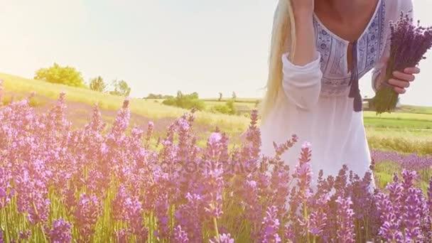 Fiatal nő, csokor friss levendula levendula mező séta