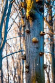Fotografie Alter Baum mit Pilz