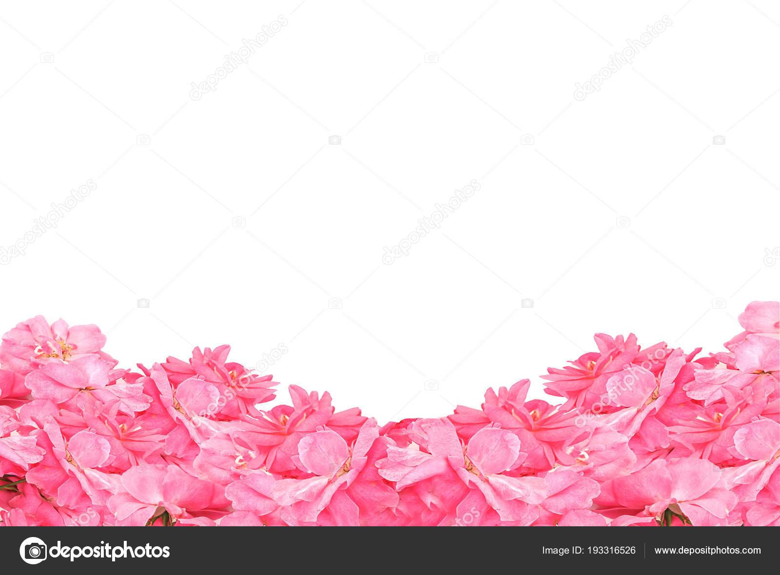 Marco del encantador rosas sobre fondo blanco. Tablero de la flor de ...