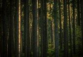 Lesní letní krajina