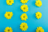Fotografie Beautiful yellow flowers