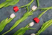 Pályázati tulipánok