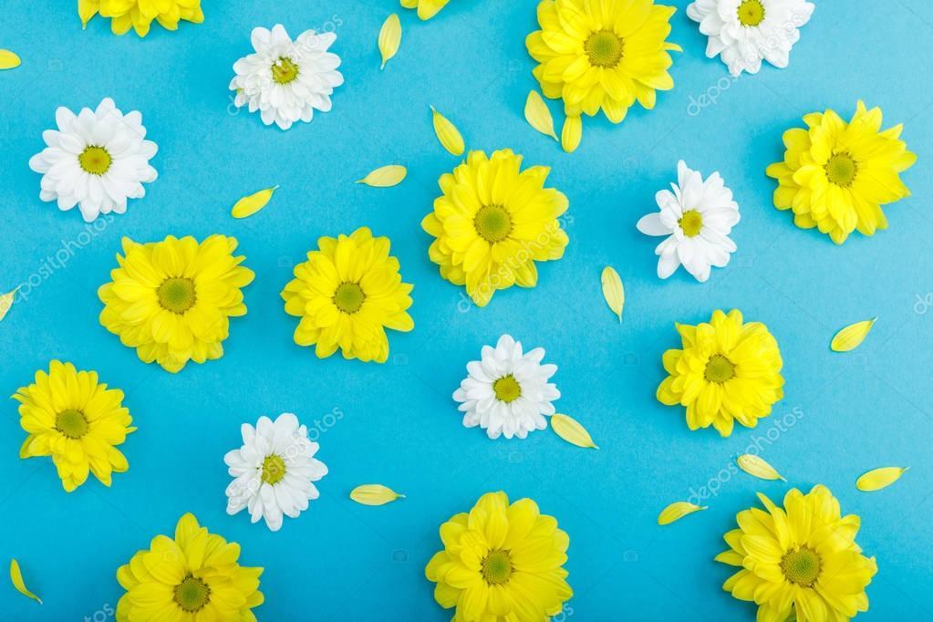Beautiful yellow and white flowers