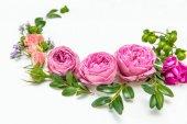 Krásné růžové růže