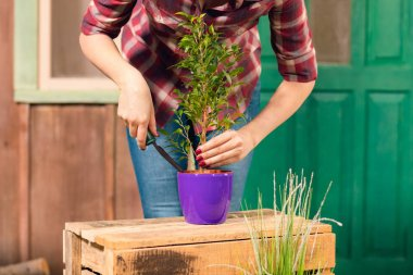 Close-up partial view of young gardener in checkered shirt cultivated plant in pot