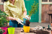 Fotografie cropped view of woman transplanting plant in new flowerpot on porch