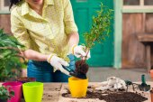 Photo cropped view of woman transplanting plant in new flowerpot on porch