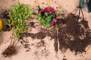 close up view of gardening tools, plants and flowerpot with soil on tabletop