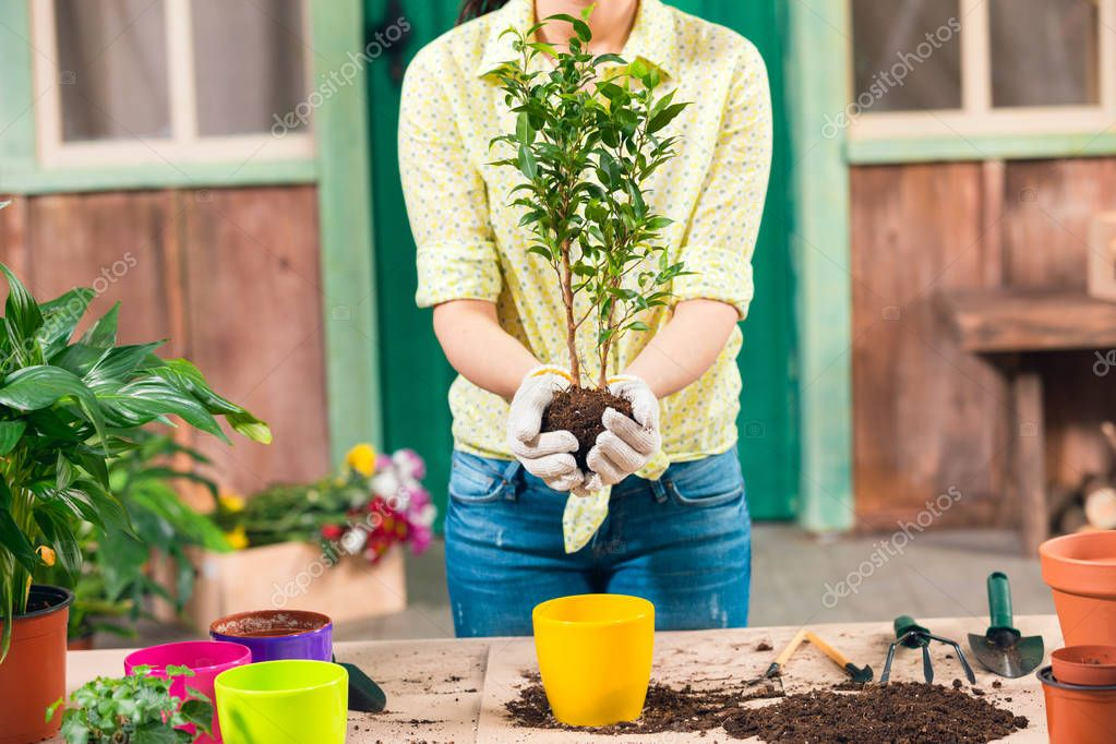 cropped view of woman transplanting plant in new flowerpot on porch
