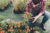 Fotografie gardener checking flower in garden