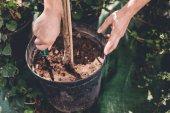 zahradník s lopatka výsadbu rostlin