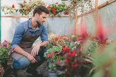 Kertész smartphone az üvegházhatású