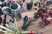 Gartengeräte mit verschiedenen Pflanzen