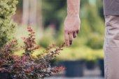 ember növényi kertben