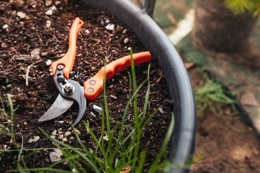 pruning shears in flowerpot