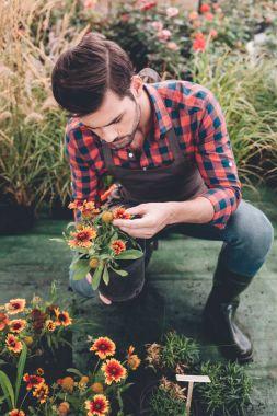 gardener checking flower in garden