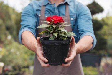 Selective focus of gardener in apron holding flower in pot in hands stock vector