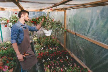 gardener checking plants in greenhouse