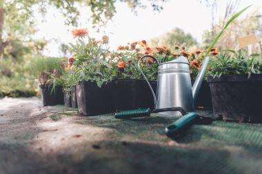 watering can, hand trowel and rake in garden