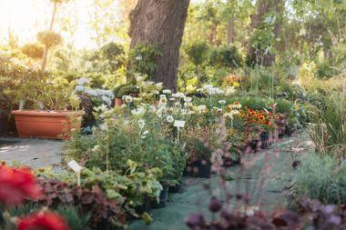 Empty garden with various plants