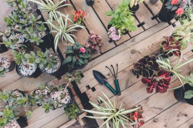 gardening tools with various plants