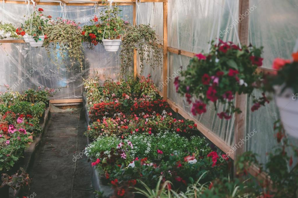 various flowers in greenhouse