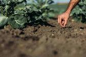 Fotografia agricoltore che semina il seme