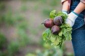 mezőgazdasági termelő gazdaság cékla területén