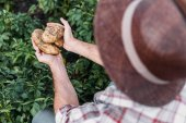 brambory hospodářství zemědělce v oblasti