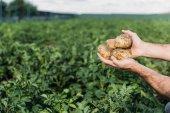 Fotografie brambory hospodářství zemědělce v oblasti