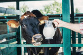 farmář s čerstvého mléka v kabince
