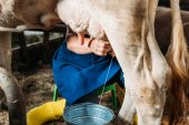 Photo farmer milking cow