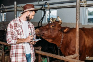 farmer taking notes in cowshed