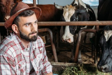 Pensive bearded farmer looking away while feeding cows in stall stock vector