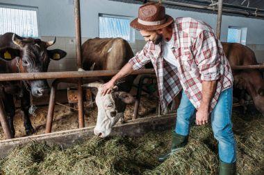 male farmer feeding cows